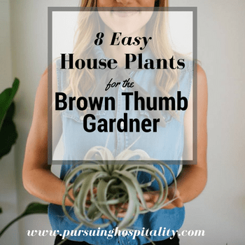 8 Easy House Plants for the Brown Thumb Gardner
