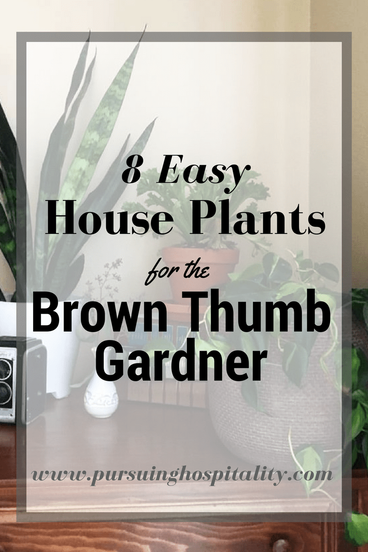 8 easy House Plants for the brown Thumb
