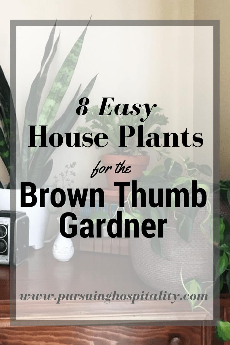 8 Easy House Plants for the Brown Thumb Gardner